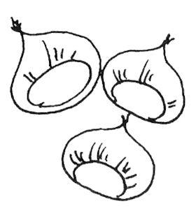 La castagna - Disegni di castagne ...
