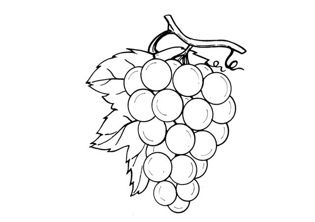Uva Da Colorare: L'uva
