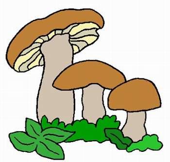 Infiammazione di fungo di unghia