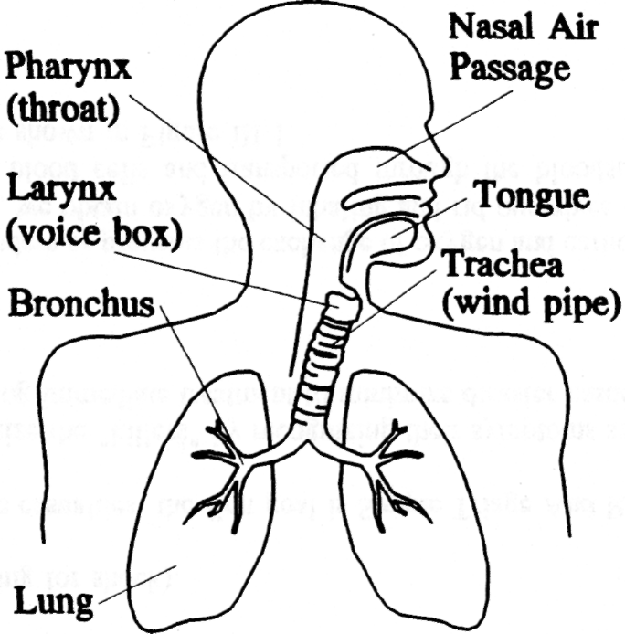 Respiratory Therapist Lung Coloring Pages